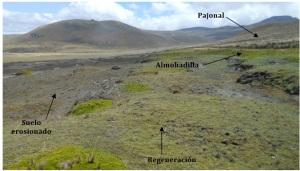 Figura 4. Formaciones vegetales de la franja de suelo erosionado
